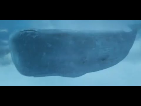 The Hitchhikers Guide to the Galaxy - The Whale