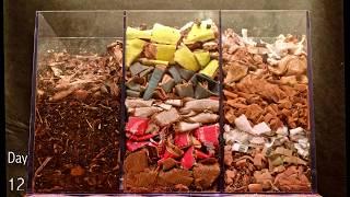 Jak dżdżownice radzą sobie w 100 dni z liśćmi, kartonem i papierem?