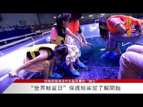 """橫琴快訊世界鲸鲨日""""保護鯨鯊從 ..."""