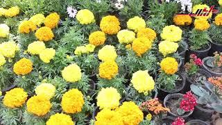 معرض الزهور ٢٠١٩.. ٣ وزراء يفتتحون المعرض بحديقة الأورمان