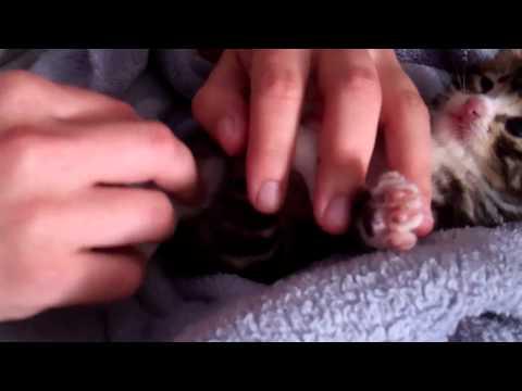 cat repellent spray for furniture