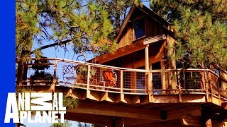 Off-the-Grid Getaway Treehouse by Animal Planet