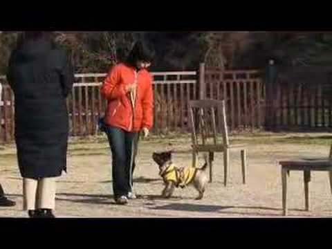 Turid Rugaas - What do I do when my dog pulls?