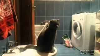 「ムムっ…!?これは何の音にゃ?!」工事の音にビックリする猫ちゃん。思わず…?