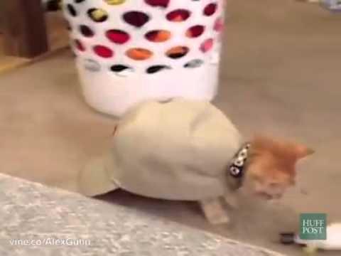 gattini che si credono tartarughe