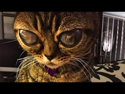 11 Cats You Won't Believe Actually Exist!