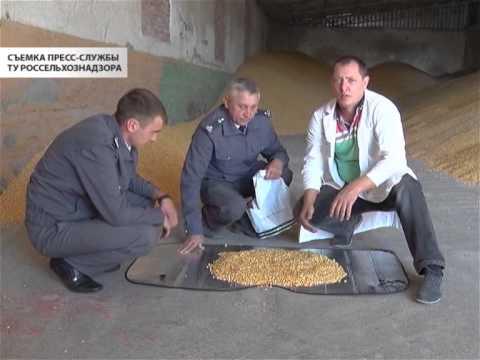 Контроль семян кукурузы