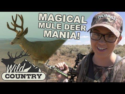 MAGICAL MULE DEER MANIA! - Wild Country