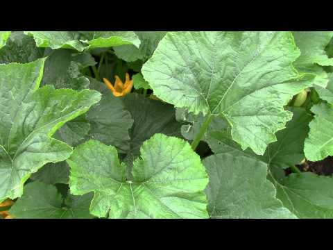 North Texas Amateur Gardening 2014 Late Spring Update