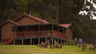 Walpole Australia  city photos : Destination WA - Walpole