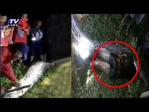 Must Watch | Python Swallows Man | Indonesia