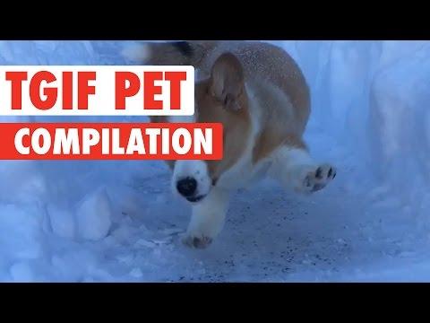 TGIF Pets Video Compilation 2017