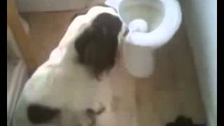 Nonton 2014 Top  Dog Funny Moments Compilation Film Subtitle Indonesia Streaming Movie Download
