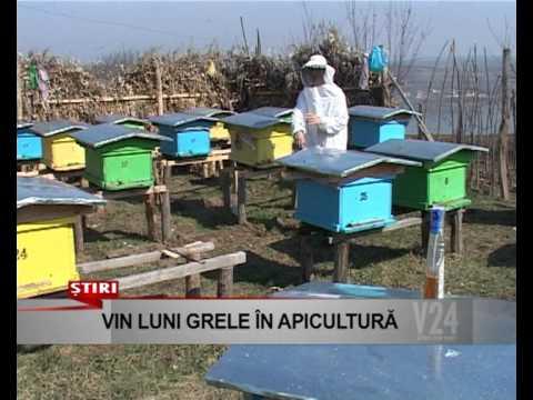 vin luni grele pentru apicultura