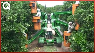 Video Modern Agriculture Machines That Are At Another Level MP3, 3GP, MP4, WEBM, AVI, FLV September 2019
