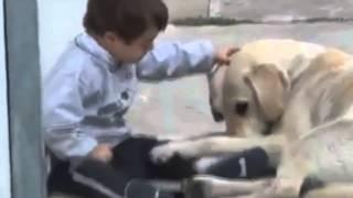 מרגש: ילד עם תסמונת דאון פוגש כלבת לברדור