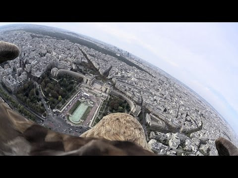 ¿Cómo ve París un águila? [VIDEO]