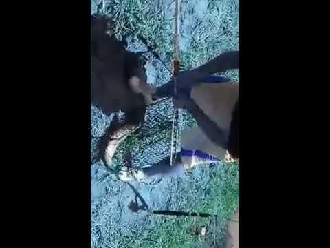 Pescaria em jumirim - sp