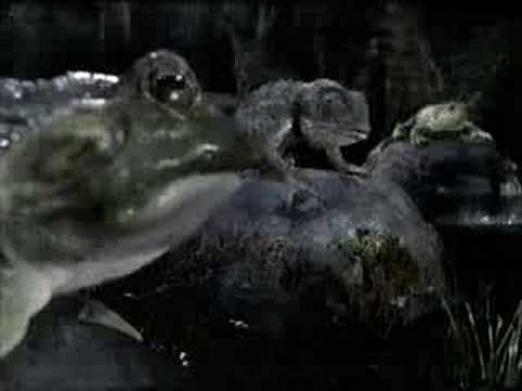 Budweiser Frogs Commercial - Got Canned
