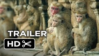 Nonton Monkey Kingdom Official Trailer #1 (2015) - Disneynature Documentary HD Film Subtitle Indonesia Streaming Movie Download