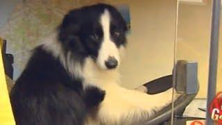Driving Doggy Prank