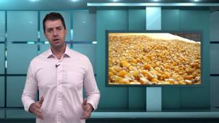 Capa do vídeo Unidade Armazenadora de grãos do governo federal recebe soja e milho de produtores