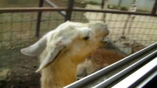 東北サファリパークで初夏を動物たちと過ごそう