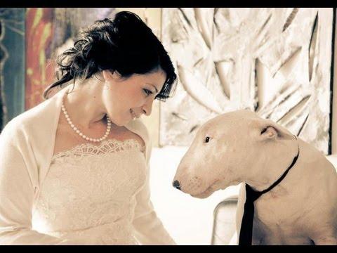 il bull terrier: un cane molto affettuoso