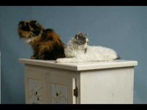 Hidy Tidy Cat Litter Boxes - Cabinets - Part 1