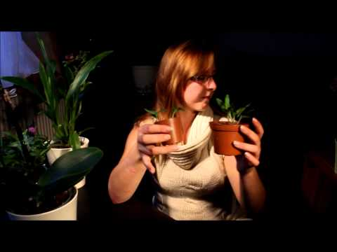 Orchideen Vermehrung: Generative und vegetative Verme ...