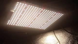 ViparSpectra P1500 SMD led grow light 2'x4' tent update by Budzilla saurus