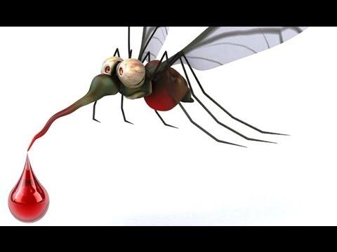 perché le zanzare ci pungono?