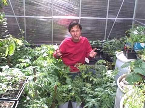 Garden tips - John from http://www.growingyourgreens.com shares his tips on how you can be prepared just in case... He encourages everyone to start a survival garden to su...