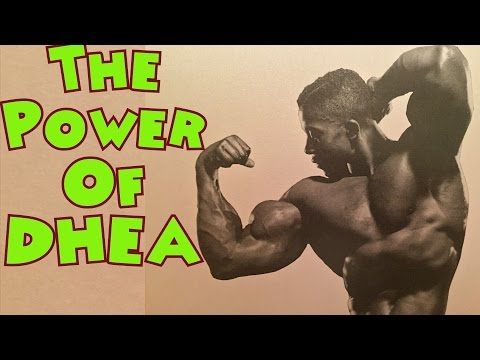 The Power of DHEA – Bodybuilding Tips To Get Big