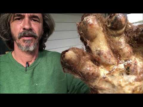 Bigfoot Hand Kept Frozen For 65 Years (science Documentary)