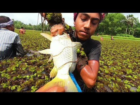 Awesome Traditional Fishing Video! Amazing Fish Hunting! - Thời lượng: 4:25.
