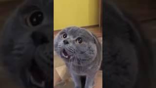 Gdy tłumaczył, że jego kot potrafi mówić to się z niego śmiali! Wtedy pokazał to filmik!