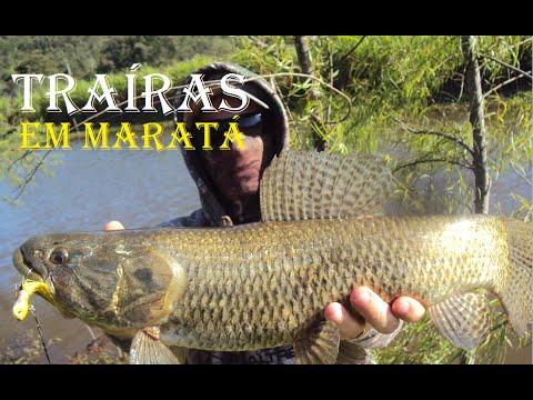 Pesca de Traíras em Maratá