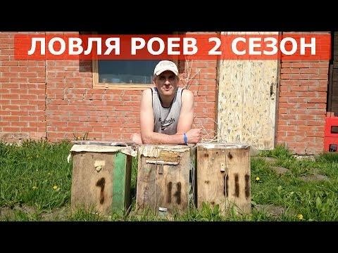 видео из пчелами ловля