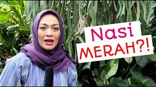 Video NASI MERAH? : Episode 36 MP3, 3GP, MP4, WEBM, AVI, FLV September 2019