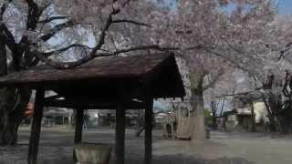 Numata Japan  city photos : SAKURA CARPET - JUOH PARK - Numata Gunma JAPAN