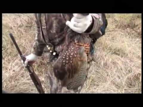 Охота на вяхиря охота на перепела