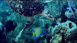 Roatan Diving April 24 & 25
