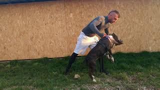 Co robić Twój pies zostanie zaatakowany? Zobacz jak rozdzielić gryzące się psy!