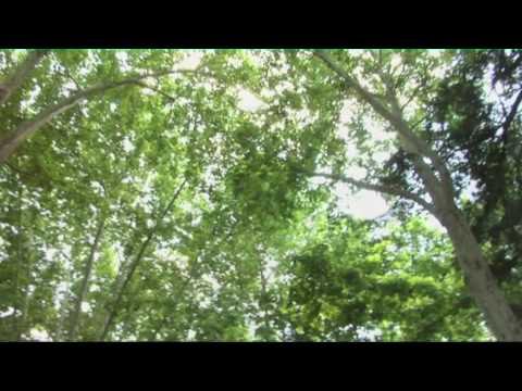 Básicos de Madrid: Parque de El Retiro
