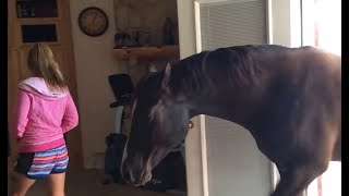 Download Video Horse Walks Inside House to Chill With Owner MP3 3GP MP4