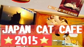 Yakumo Japan  city photo : JAPAN CAT CAFE maine coon cattery 【cat house YAKUMO NYAN】2015 Omnibus part②ねこの家 やくもにゃん