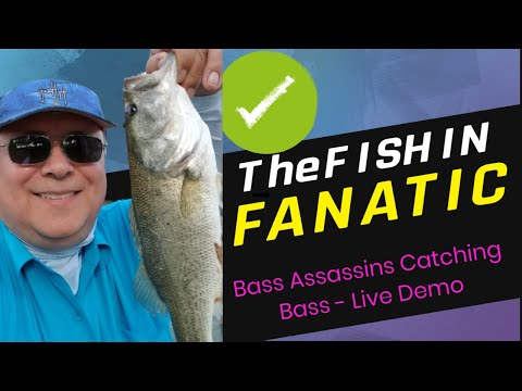 Assassinating Bass with Bass Assassins