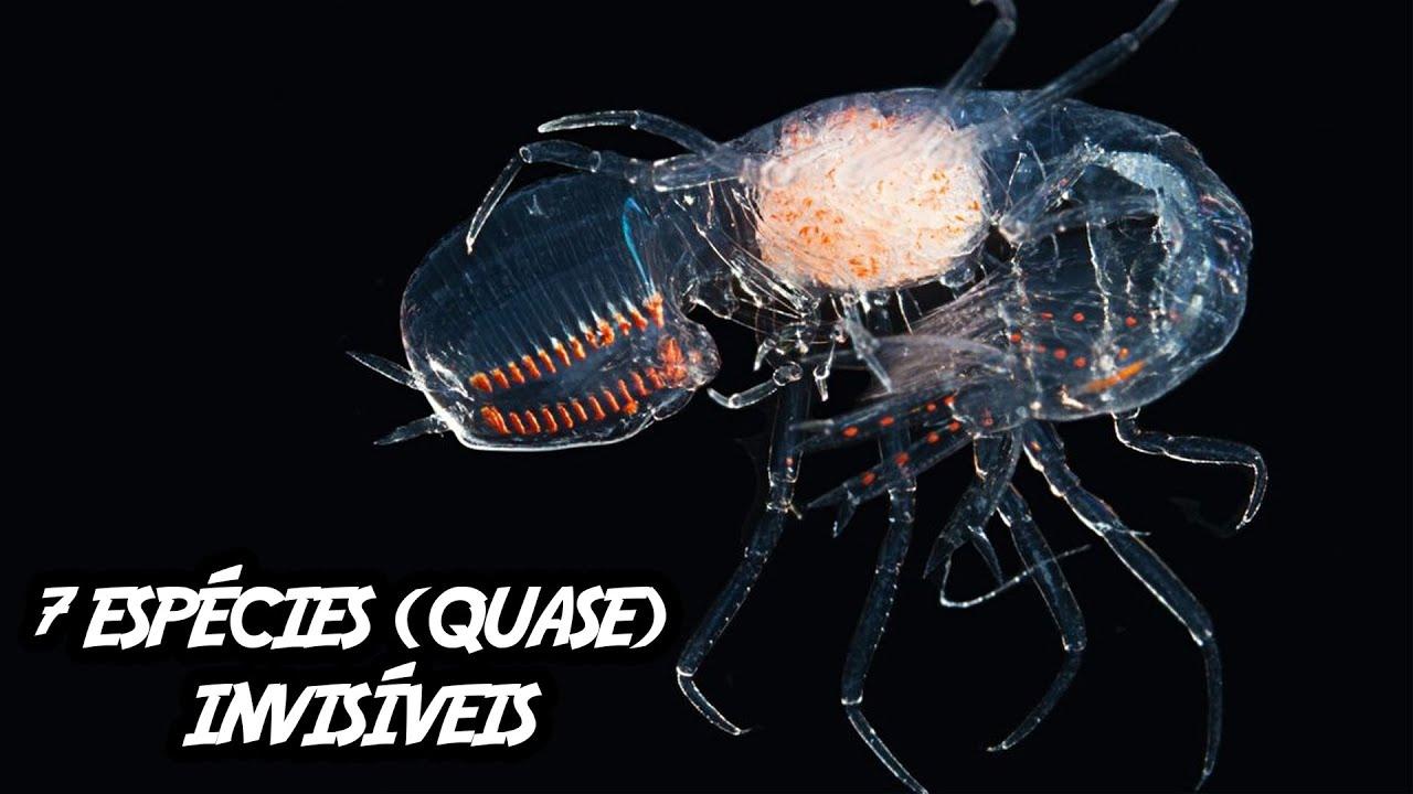 7 espécies (quase) invisíveis que você precisa conhecer