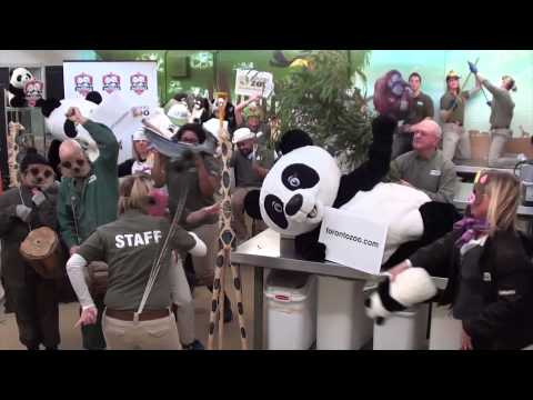 Giant Pandas are coming to Toronto Zoo - Harlem Shake ensues